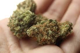 Guide autofloraison de cannabis