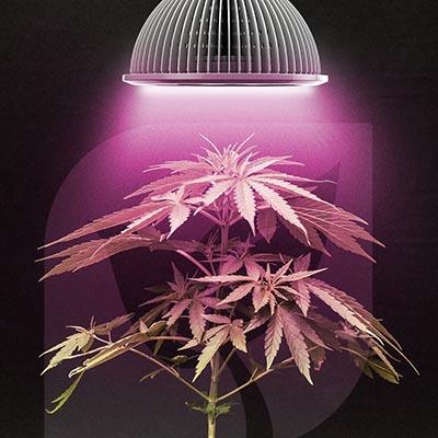 lumiere pour cannabis