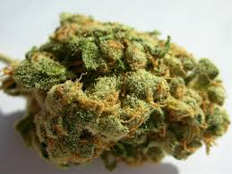 jack-herer cannabis semences