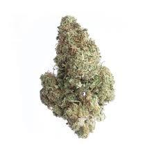 graines de cannabis jack herer cbd