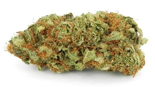master kush cannabis semences