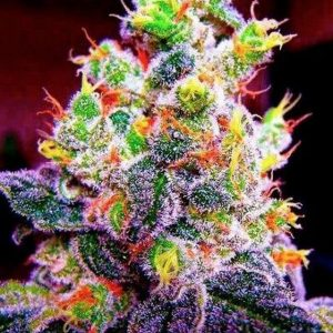 fruity pebble og feminise