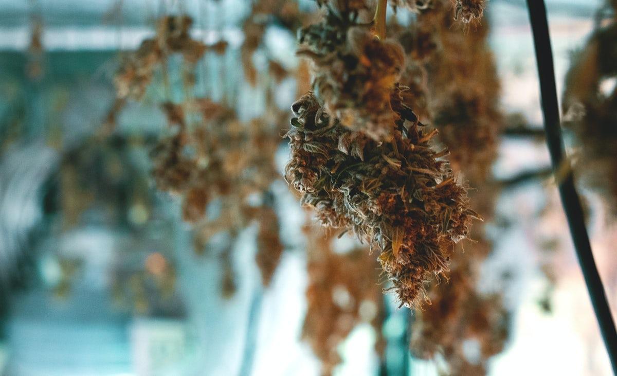sechage cannabis